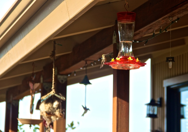 san jose california bird feeder
