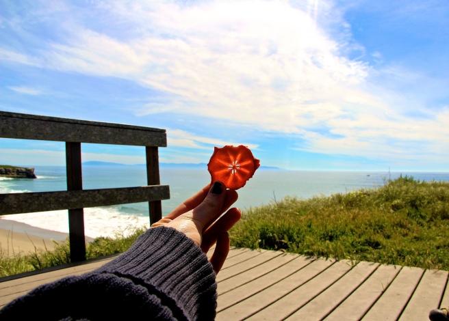 monterey bay california persimmons